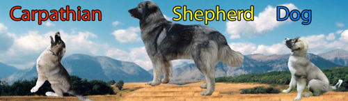 Carpathian Dog