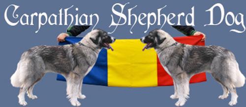 Carpathian Dog